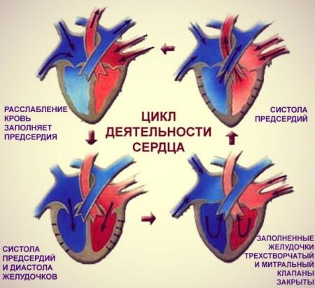 Нагнетательная функция сердца