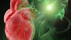 Фракция выброса сердца