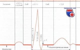 Какое состояние миокарда отражает зубец R на результатах ЭКГ?