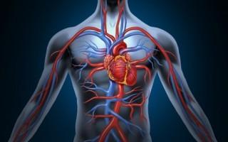 Обзор сосудов несущих кровь к сердцу человека