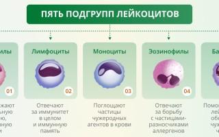 Причины отклонения от нормы уровня лейкоцитов в крови у мужчин и способы нормализации показателя