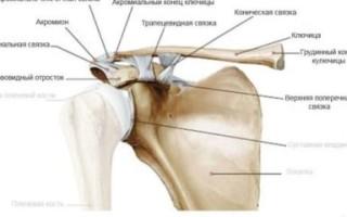 Механизм развития артроза грудино-ключичного сочленения, факторы риска, основные признаки нарушения, лечебные мероприятия
