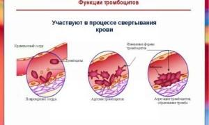 Роль антител к тромбоцитам и причины их количественного отклонения от нормы