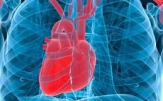 Увеличенное сердце причины у взрослого