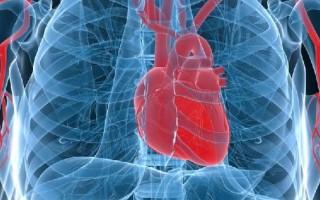 В какой стороне сердце у человека