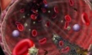 Плазменные и клеточные факторы, участвующие в процессе свертывания крови