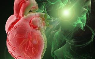 Нормы фракции выброса сердца