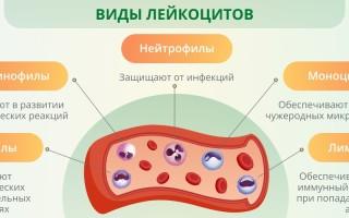 Что называют лейкоцитарной формулой, технология забора крови, о чем говорят отклонения показателей?