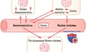 В чем особенность белков плазмы крови и их функции