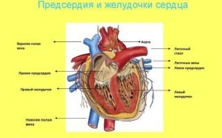 Недостаточность аортального клапана 2 степени