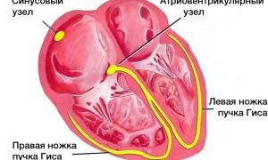 Синусовая аритмия у ребенка 6 лет