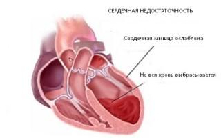 Сколько клапанов в сердце