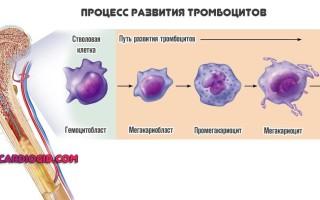 Показатель PDW в анализах крови, расшифровка результатов, причины повышения или понижения тромбоцитарного индекса, способы коррекции