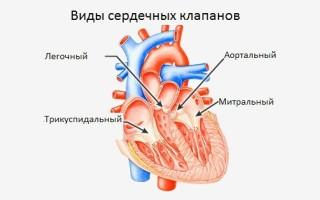 Клапан на сердце