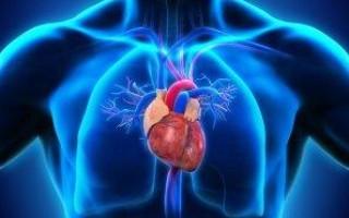 Сколько в сердце клапанов у человека