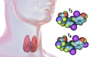 Когда назначают анализы на гормон Т4, подготовка и расшифровка данных